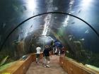 Подводная обсерватория — жемчужина Эйлата